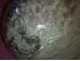Abalone pärlikarp - JUUBELIALLAHINDLUS