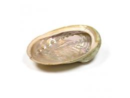Abalone Haliotis pärlikarp - UUS