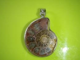 Kivistis - Ammoniit - Goniatiit - ripats - VIIMANE