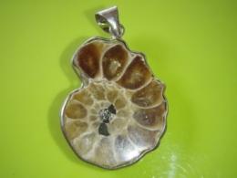 Kivistis - Ammoniit - Goniatiit - ripats