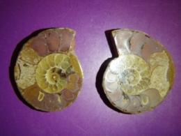 Kivistis - Ammoniit - poolitatud ammoniit