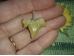 Kivistis - hai hammas - ripats