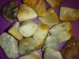 Korall - agatiseerunud - VIIMASED