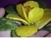 Erinevad poolvääriskivid - oranž kaltsiit ja serpentiin - kaunis lilleõis - KEVAD-SUVINE ALLAHINDLUS