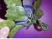 Poolvääriskividest lill - fluoriit ja serpentiin - KEVAD-SUVINE ALLAHINDLUS