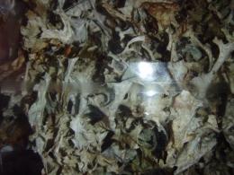 Mõnus taimetee - Islandi käokõrv - VIIMANE