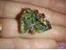 Vismut - kristall - ALLAHINDLUS